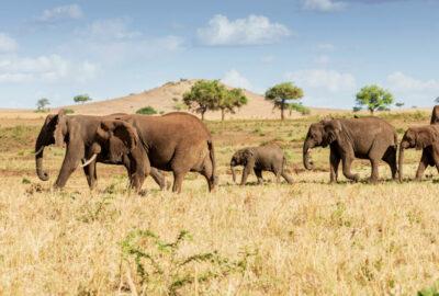 Familiereis naar Oeganda