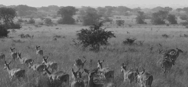 Reizen naar Oeganda